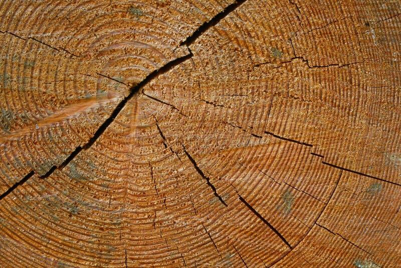 Anéis do ano no tronco de árvore foto de stock