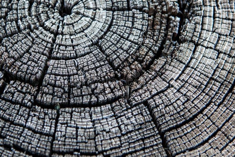 Anéis preto e branco do coto de árvore imagens de stock