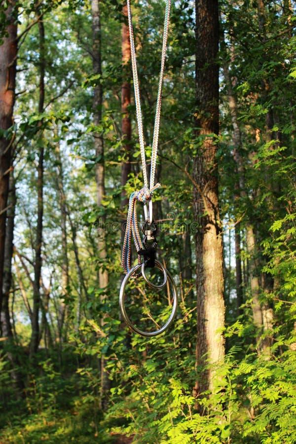 anéis que penduram de uma árvore na floresta para praticar a sujeição e o shibari na natureza conceito de BDSM avaliação da repor fotografia de stock royalty free