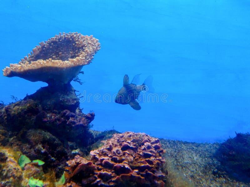 Anémona de mar foto de archivo