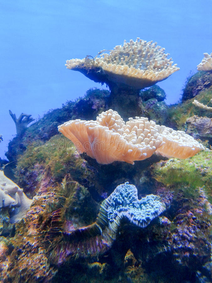 Anémona de mar imagen de archivo