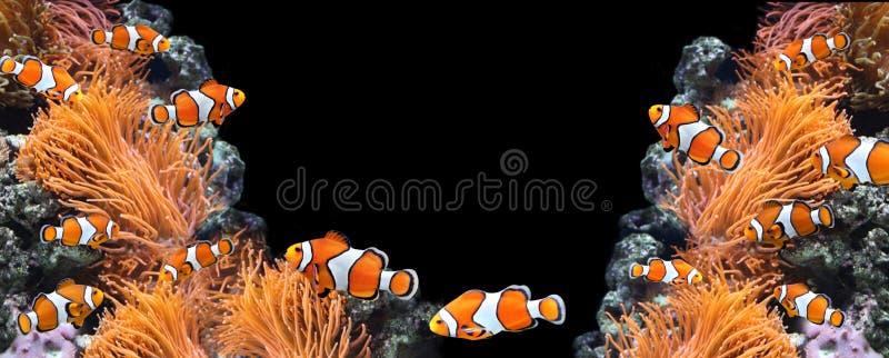 Anémona de mar y pescados del payaso fotografía de archivo libre de regalías