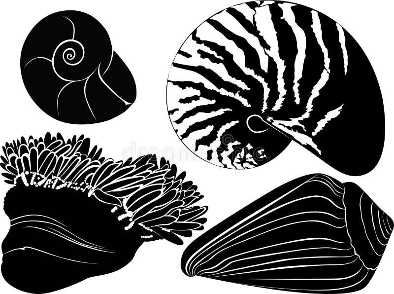 Anémones de coquillages de Nautilus illustration stock