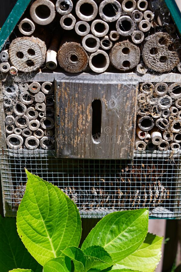 Free An Insect House In The Garden With Different Compartments For Different Insects Royalty Free Stock Photography - 179610427