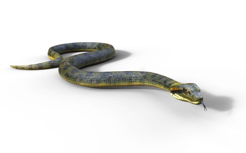 Anaconda, Constrictor de boa a serpente peçonhento a mais grande do ` s do mundo ilustração do vetor