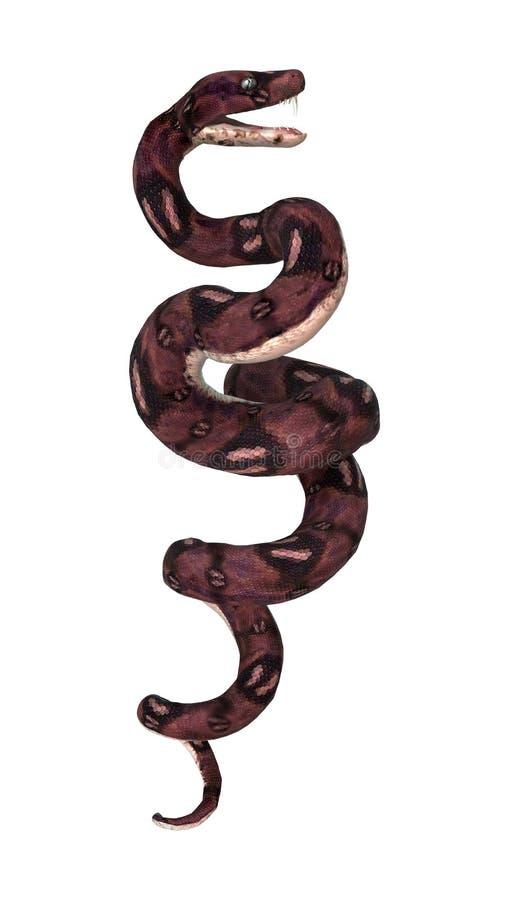 Anaconda Snake on White stock photos