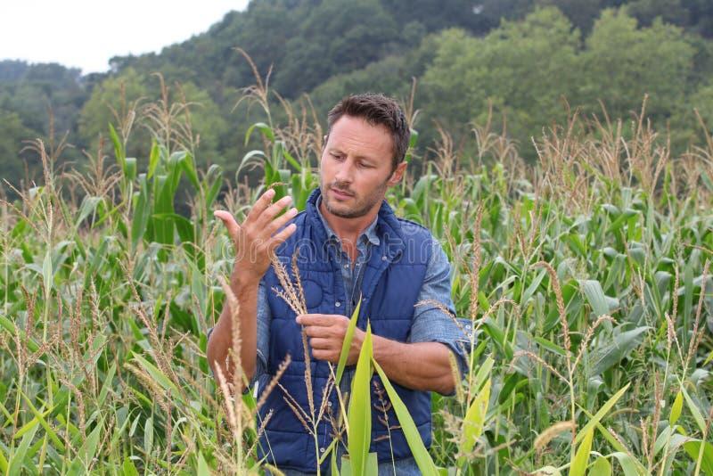 Analisando a colheita imagens de stock