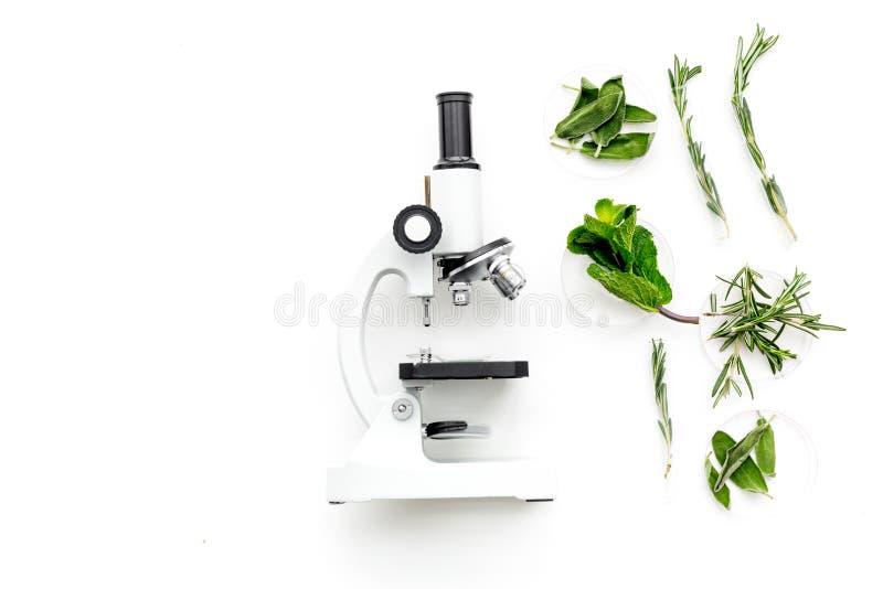 Analisi alimentare Gli antiparassitari liberano le verdure Erbe rosmarini, menta vicino al microscopio sullo spazio bianco della  immagini stock