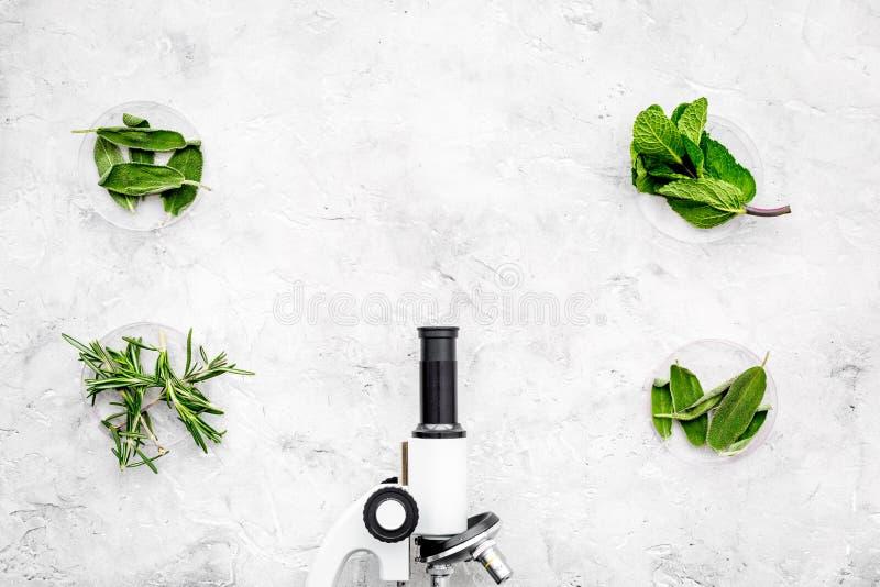 Analisi alimentare Gli antiparassitari liberano le verdure Erbe rosmarini, menta vicino al microscopio sullo spazio grigio della  immagine stock libera da diritti