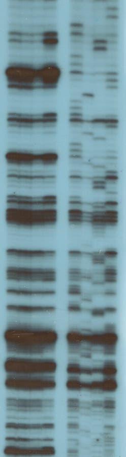 Analisi della sequenza di RNA fotografia stock