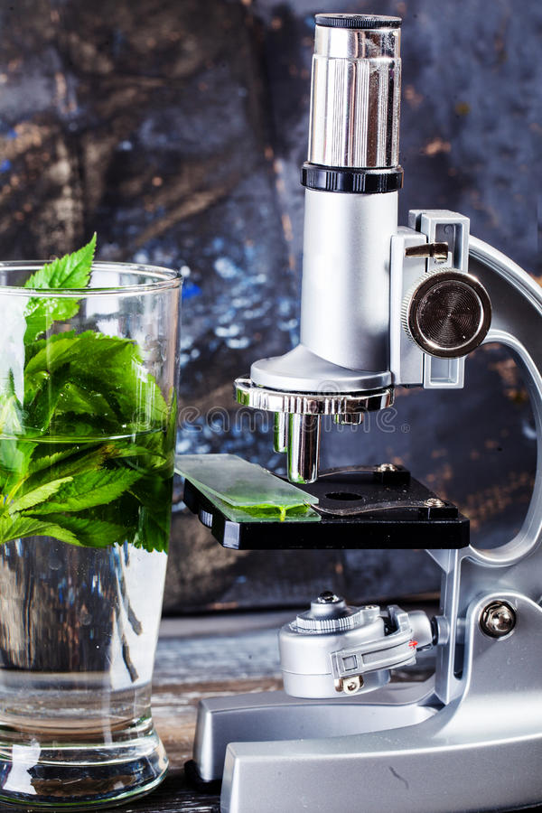 Analisi di studio dello scienziato di scienza di ricerca del microscopio che analizza ecologia di biologia organica fotografia stock