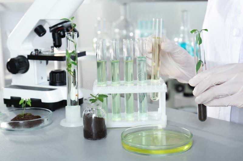 Analista com os tubos de ensaio que fazem a análise química fotografia de stock