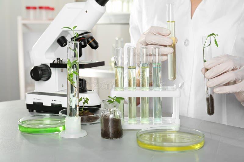 Analista com os tubos de ensaio que fazem a análise química fotos de stock royalty free