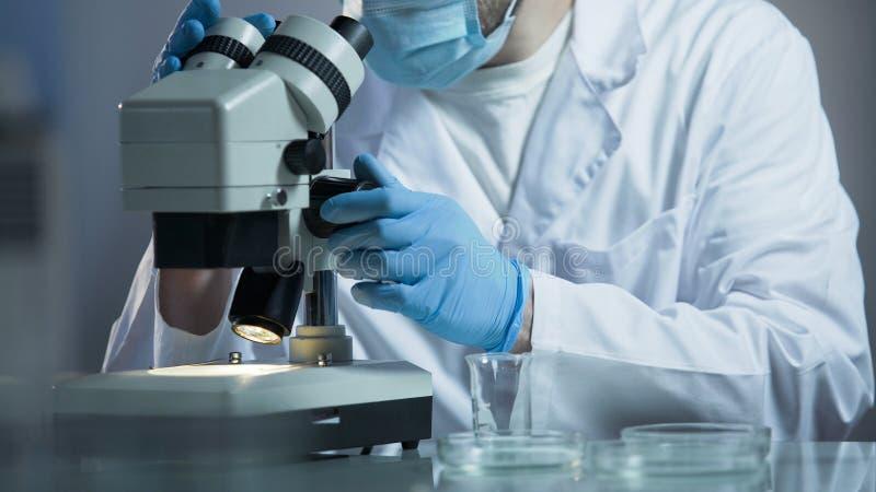 Analista médico que faz a pesquisa bioquímica de amostras de sangue em seu laboratório fotos de stock royalty free