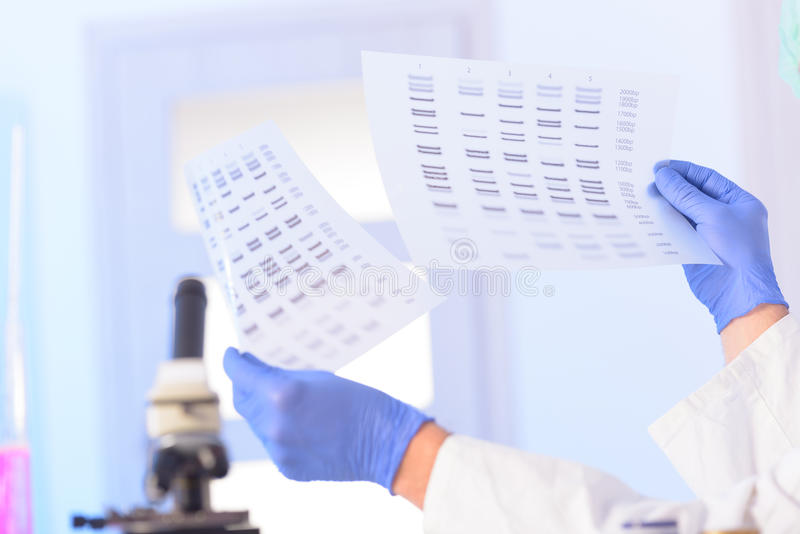Analizing脱氧核糖核酸 免版税库存图片