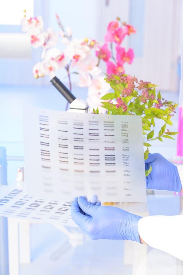 Analizing脱氧核糖核酸GMO 免版税图库摄影