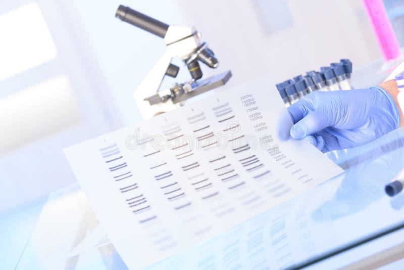 Analizing DNA obraz stock