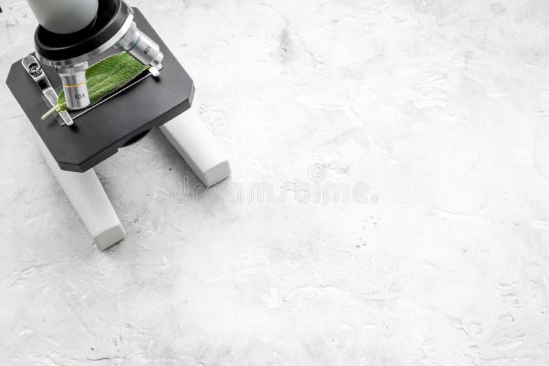 Analizować karmowego pojęcie zdrowych produktów Liście pod mikroskopem na popielatej tło odgórnego widoku kopii przestrzeni fotografia stock