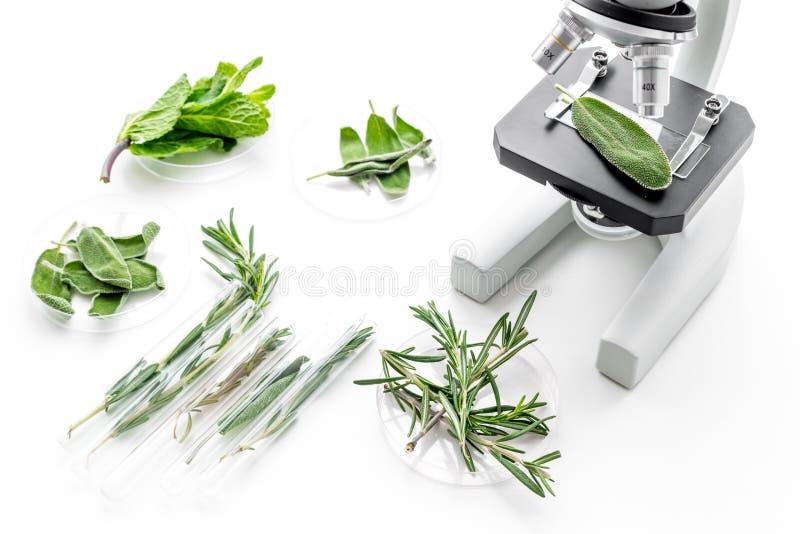 Analizować karmowego pojęcie zdrowych produktów Ziele rozmaryny, mennica pod mikroskopem na białego tła odgórnym widoku obrazy stock