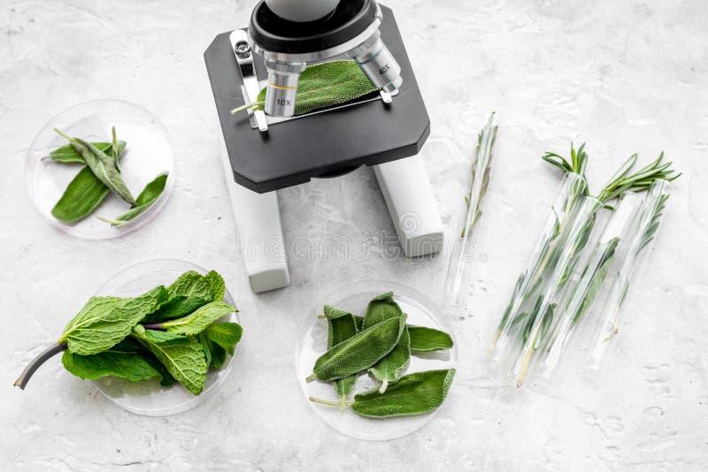 Analizować karmowego pojęcie zdrowych produktów Ziele rozmaryny, mennica pod mikroskopem na popielatego tła odgórnym widoku zdjęcia stock