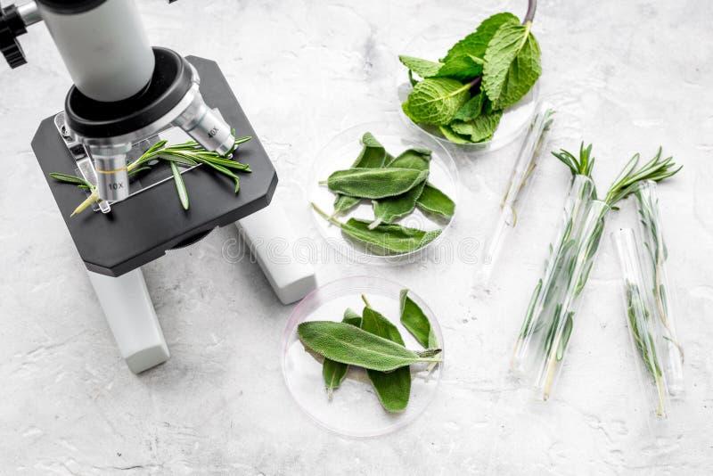 Analizować karmowego pojęcie zdrowych produktów Ziele rozmaryny, mennica pod mikroskopem na popielatego tła odgórnym widoku fotografia royalty free