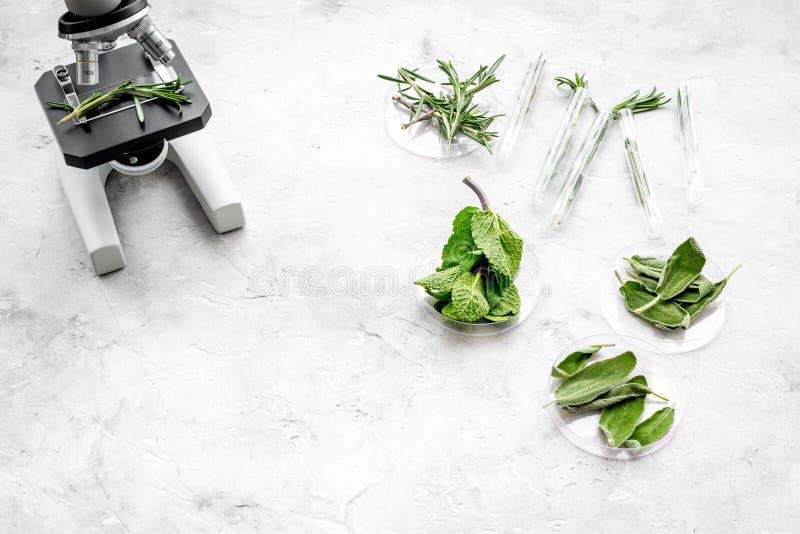 Analizować karmowego pojęcie zdrowych produktów Ziele rozmaryny, mennica pod mikroskopem na popielatej tło odgórnego widoku przes fotografia royalty free