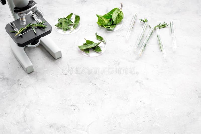 Analizować karmowego pojęcie zdrowych produktów Ziele rozmaryny, mennica pod mikroskopem na popielatej tło odgórnego widoku przes obraz stock