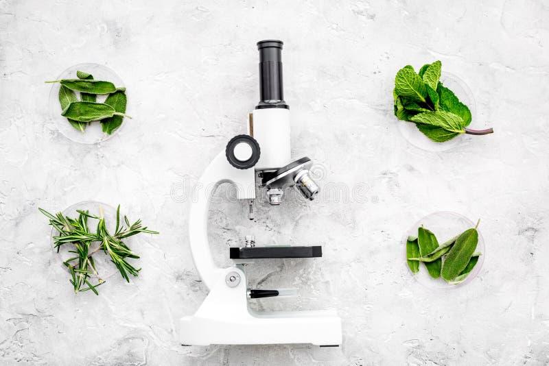 Analizować karmowego pojęcie zdrowych produktów Ziele rozmaryny, nowy pobliski mikroskop na popielatego tła odgórnym widoku zdjęcie stock