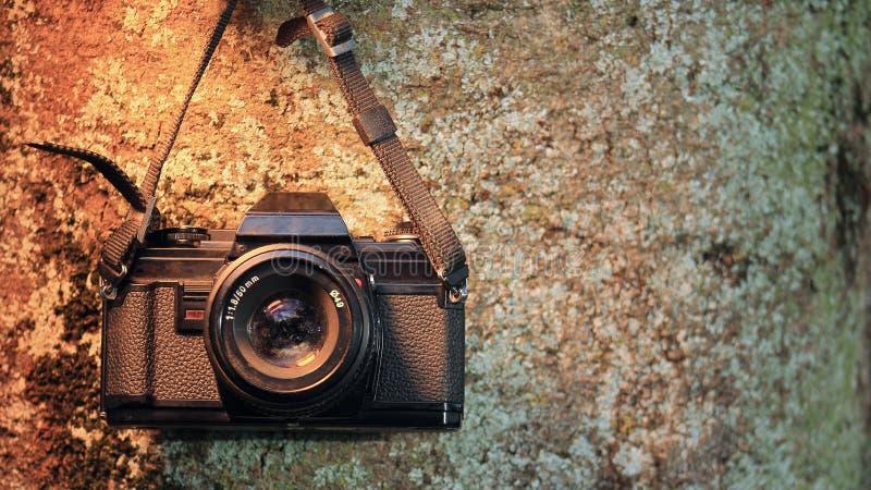 Analog kamera na drzewnym bagażniku zdjęcia royalty free