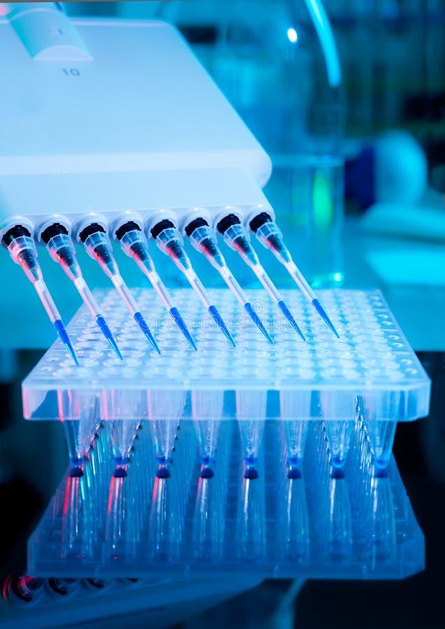 Analyse d'amplification d'ADN photographie stock libre de droits
