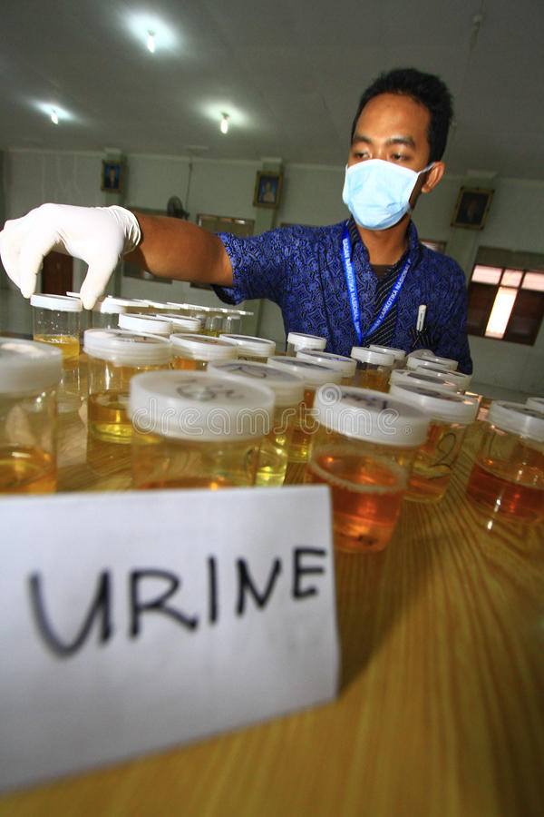 Analyses d'urine pour des étudiants image libre de droits