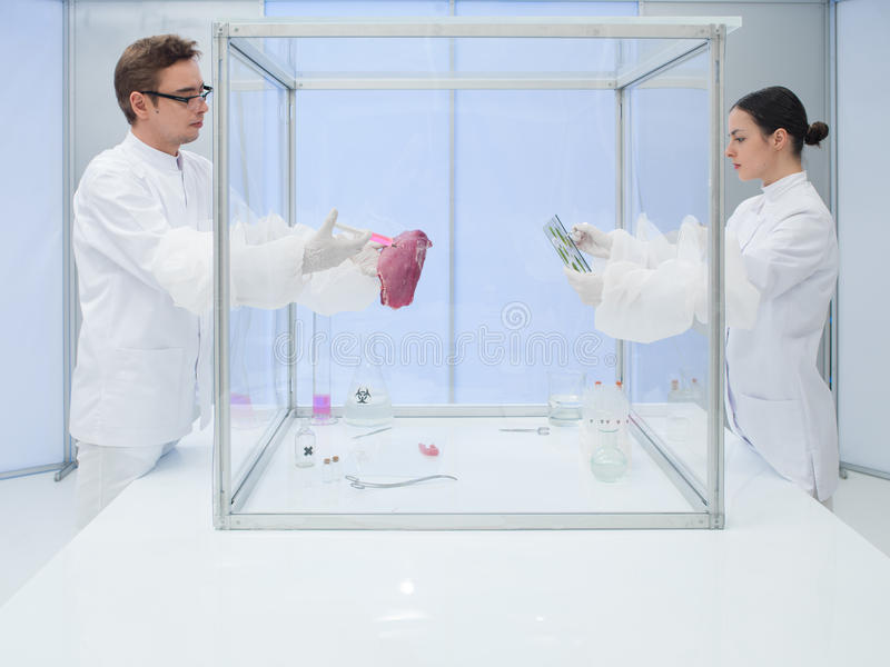 Analyzing biological matter in sterile chamber. Two scientists in the lab, a men and a woman, analyzing a chunk of raw meat and biological cultures in a sterile stock photo