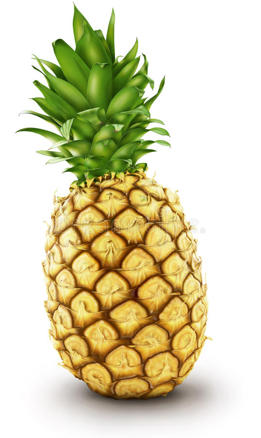 Ananas illustration libre de droits