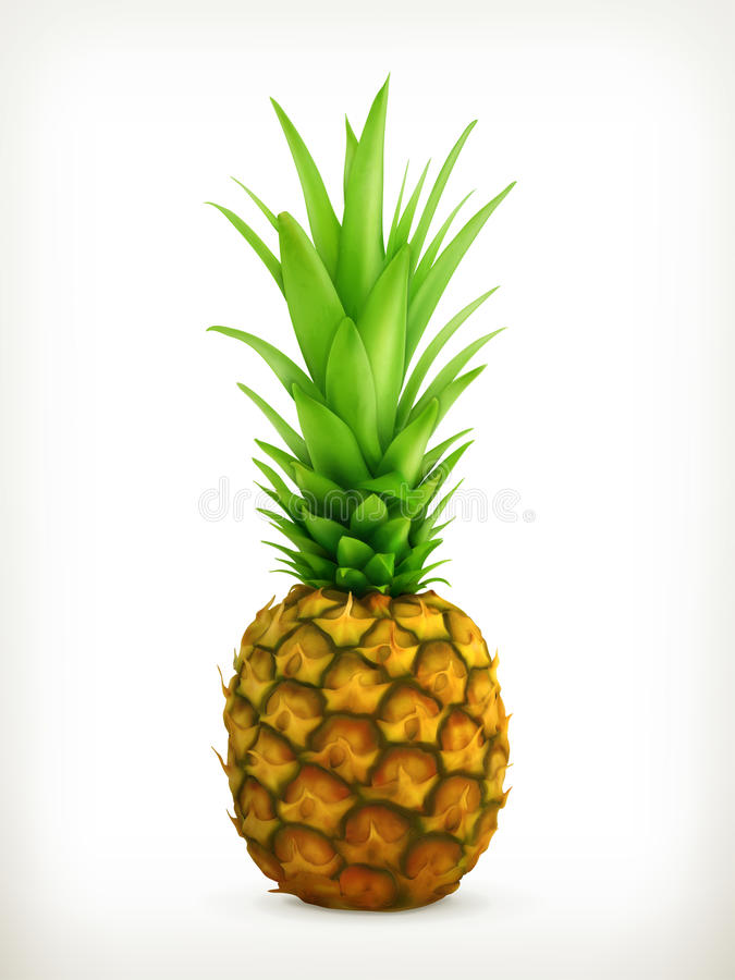 Ananas vektor illustrationer