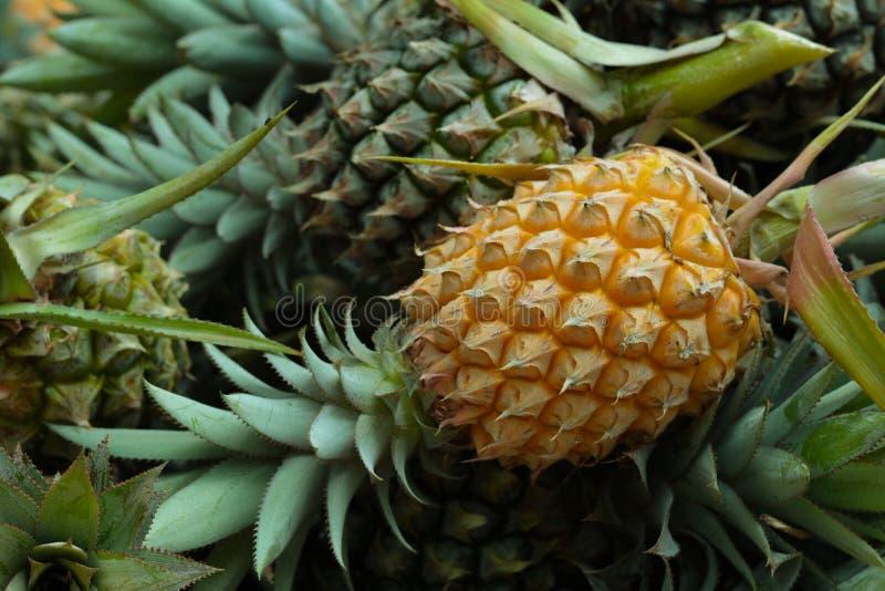 Ananas stock foto's