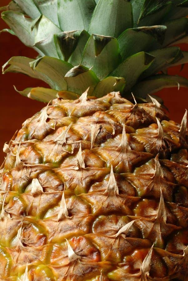 ananas obrazy royalty free