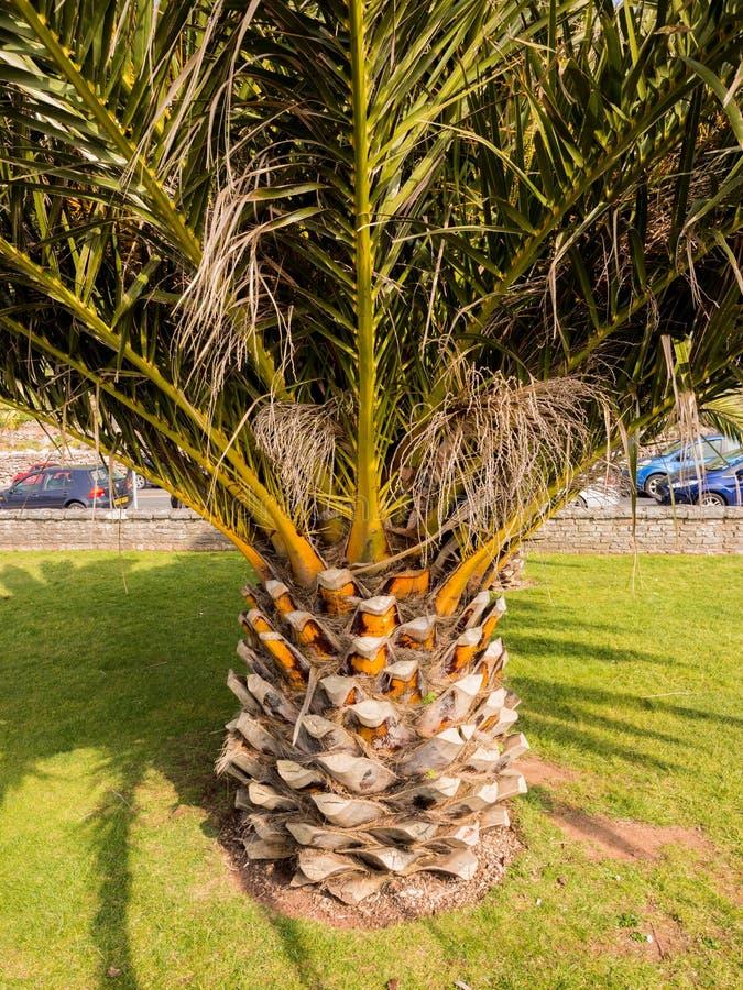 ananas royaltyfri bild