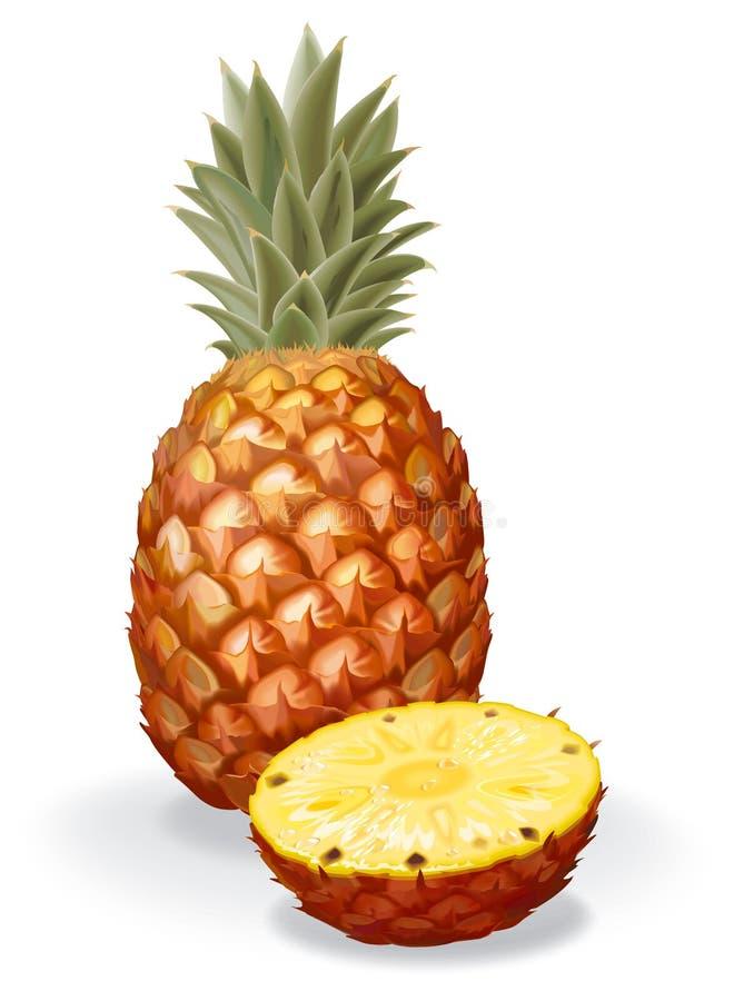 ananas royaltyfri illustrationer