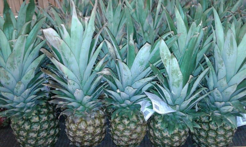 ananas photographie stock