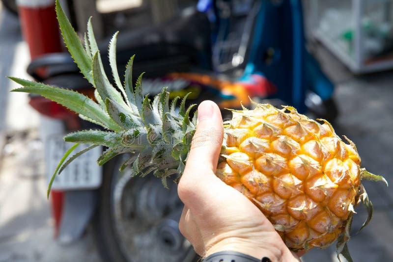 Download Ananas dans la main image stock. Image du marché, vietnam - 56476631