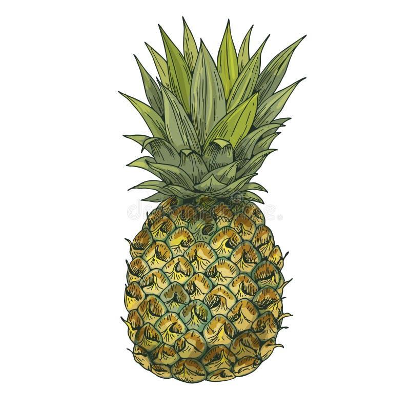 Ananas De volledige vectorillustratie van de kleuren realistische schets royalty-vrije illustratie