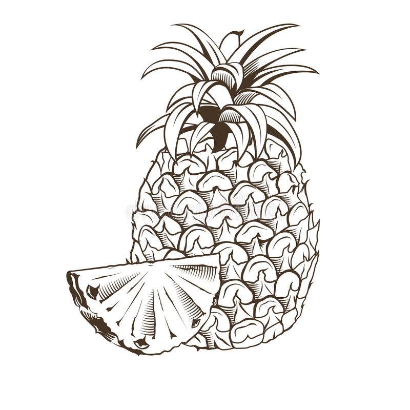 Ananas in der Weinleseart vektor abbildung
