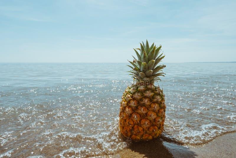 Ananas en mer photos stock