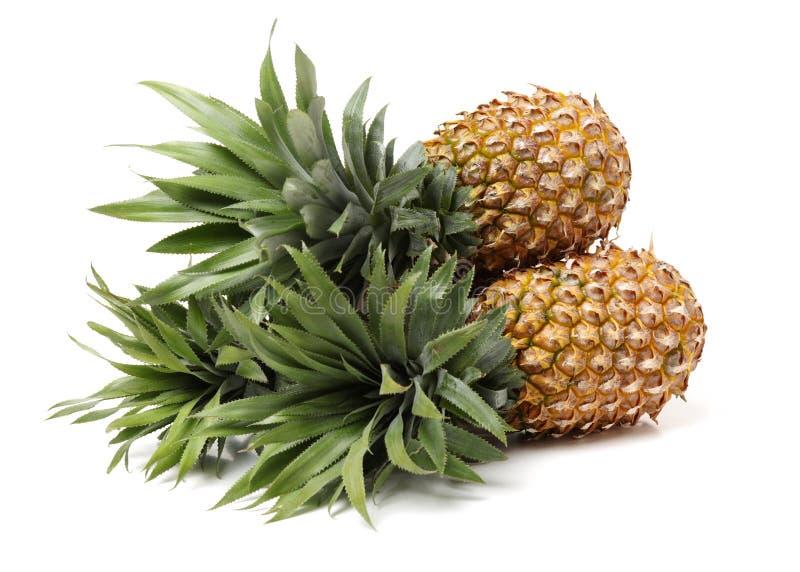 Ananas Feinschmecker, Frucht stockfoto