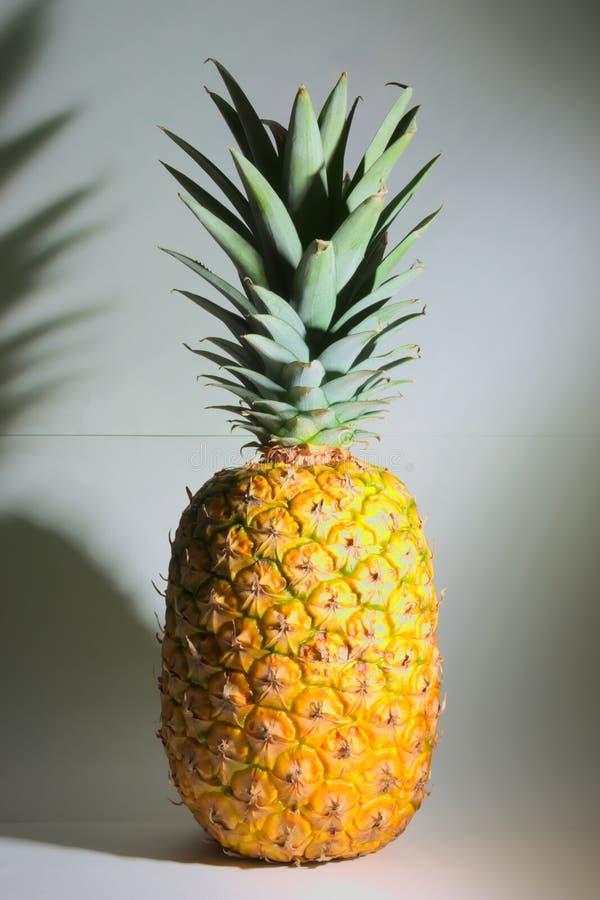 ananas fruktskott skjutit färgrikt Vit bakgrund arkivbilder