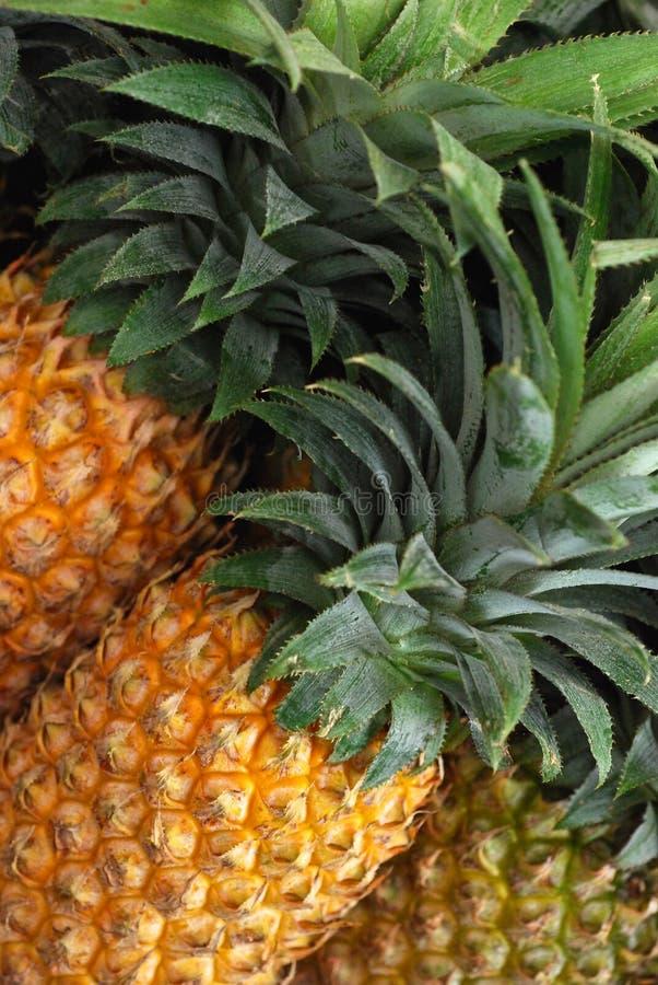 Ananas in markt stock afbeeldingen