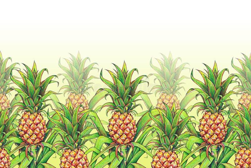 Ananas med gräsplan lämnar att växa för tropisk frukt i en lantgård Gräns för ram för modell för ananasteckningsmarkörer sömlös F stock illustrationer