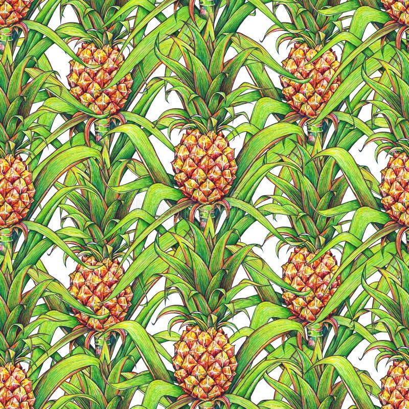 Ananas med gräsplan lämnar att växa för tropisk frukt i en lantgård Sömlös modell för ananasteckningsmarkörer på en vit bakgrund  stock illustrationer