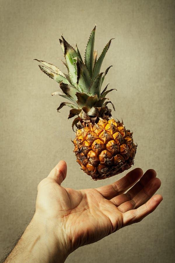 Ananas nano Nature et homme Légèreté de nourriture image libre de droits