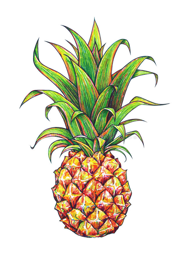 Ananas på en vitbakgrund Grafisk teckning tropisk frukt handwork royaltyfri illustrationer